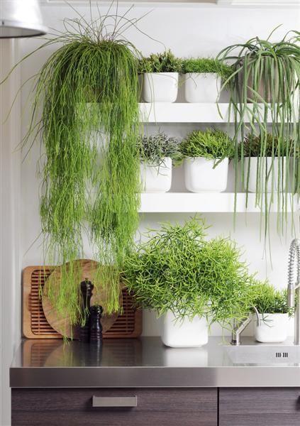 Jardin vertical en cocina