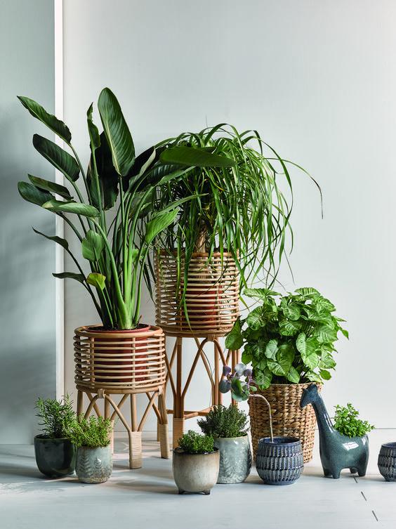 Plantas individuales en maceteros