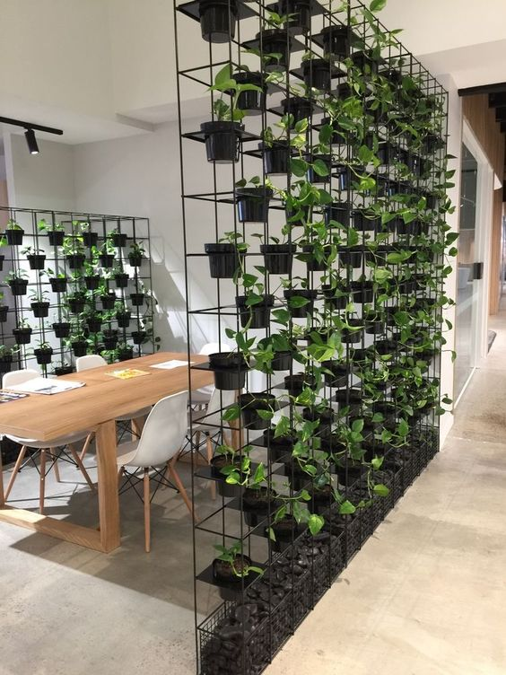 Separar espacios con vegetacion